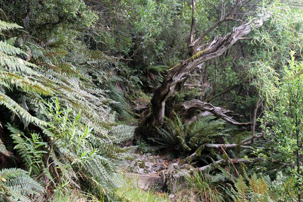 En la ladera de uno de los montes próximos a Mount Cook